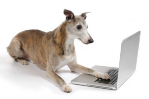 Whippet dog working on laptop