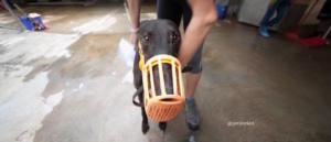 8 spritely-keroma adozione greyhound macao