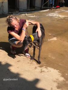 3 sprite-point adozione greyhound macao