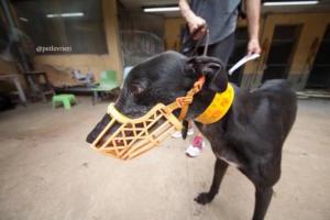 8 sprite-point adozione greyhound macao