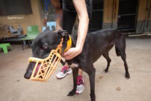 9 sprite-point adozione greyhound macao